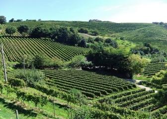 NEIKER-Tecnalia promueve la viticultura sostenible del viñedo atlántico mediante la reducción de fitosanitarios