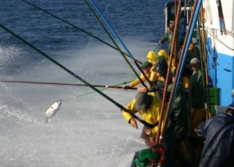 Un estudio liderado por AZTI revela que el cambio climático redistribuirá los atunes